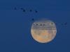 Blue Moon NSG Petkum, Foto (C): Voß