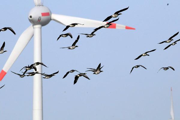 Windkraftanlagen auswirkungen auf die umwelt