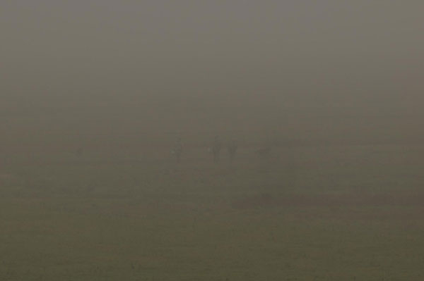 """Nebeljäger im NSG """"Petkumer Deichvorland""""_10Nov2011 Foto (C): Voß"""