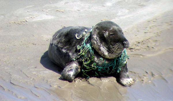 Müll im Meer verletzt und tötet | Wattenrat