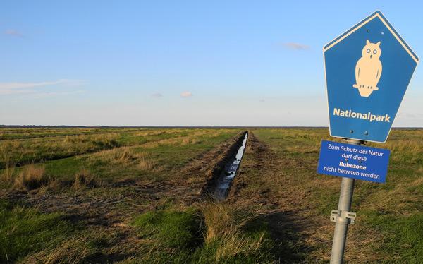 Entwässerte Salzwiese im NAtionalpark, Ruhezone (strnegste Schutzzone), östl. Dornumersiel, LK Aurich, Foto (C): Manfred Knake