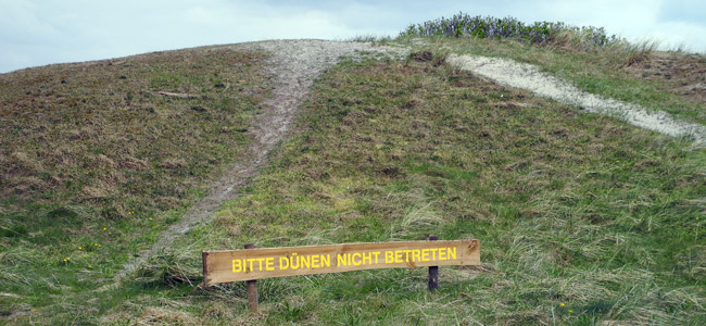 Schutzdünen auf Langeoog, April 2015, Foto (C): Manfred Knake