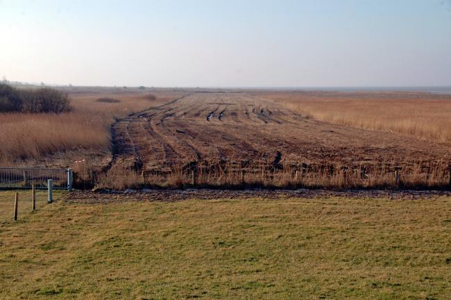 Gemähter Bereich im Vorland Campen, Februar 2015. Foto: NLWKN