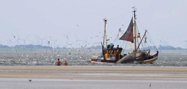 Möwen warten auf den wieder über Bord gegangenen Beifang; Langeoo, Blickrichtung Festland, Foto (C): Eilert Voß
