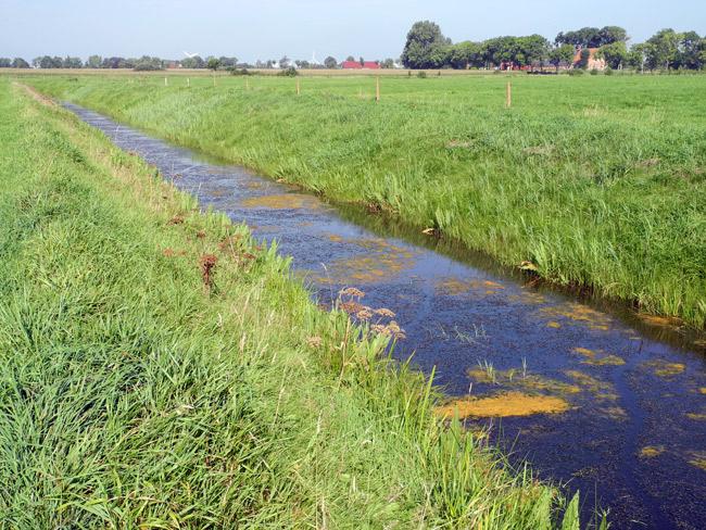 Eutrophiertes Gewässer - Holtgast, Landkreis Wittmund