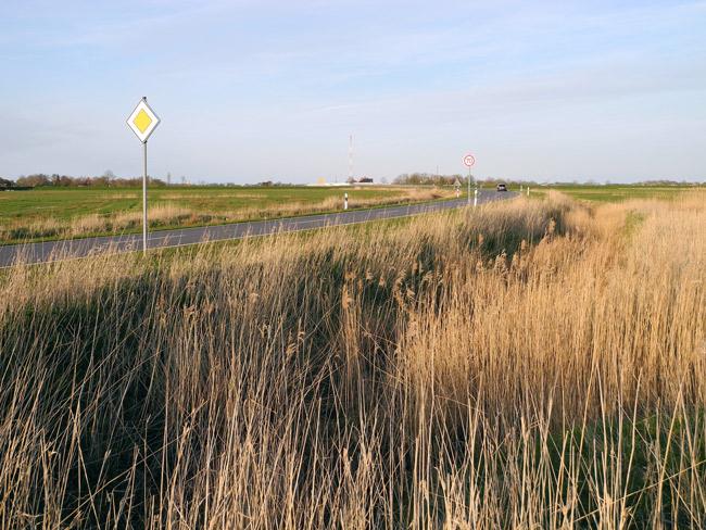 """Die """"kommunale Entlastungsstraße führt u.a. mitten duch ein ehemaliges Schilfgebiet, viele schilfbrütenden Vogelarten verloren so ihren Lebensraum. Foto (C): Manfred Knake"""