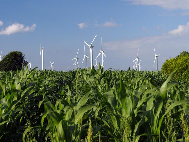 Windenergieanlagen und Maisanbau zerstören die Rastflächen für Zugvögel: Utgast/Gemeinde Holtgast, LK Wittmund, 1,5 km vom Nationalpark Wattenmeer entfernt, Foto (C): Manfred Knake