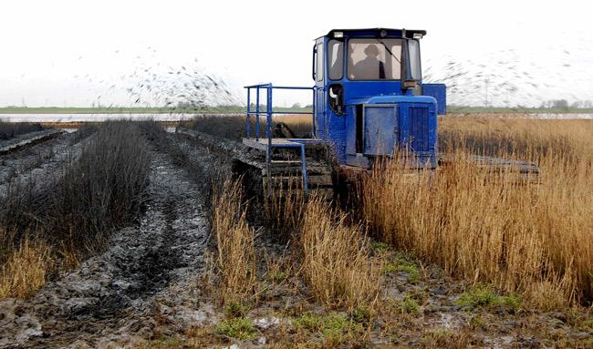 Alles schwarz: Grüppenfräse bei Kettenfahrzeug zieht Entwässerungsgräben in Salzwiese, Dollart, LK Leer, Foto (C): Eilert Voß