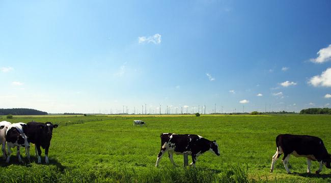 Planungsfläche Ochtersum, Lebensraum von Wiesen- und Kornweihe, Rastgebiet von Gänsen und Bekassien. Hier sollte eigentlich ein Lebensraum für Wiesenvögel verbessert werden. Foto (C): Manfred Knake