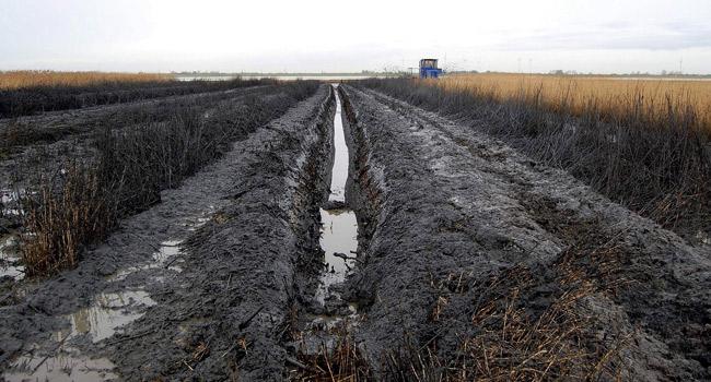 Grüppenfräse zieht Gräben in den Salzwiesen des Dollarts, Foto (C): Eilert Voß