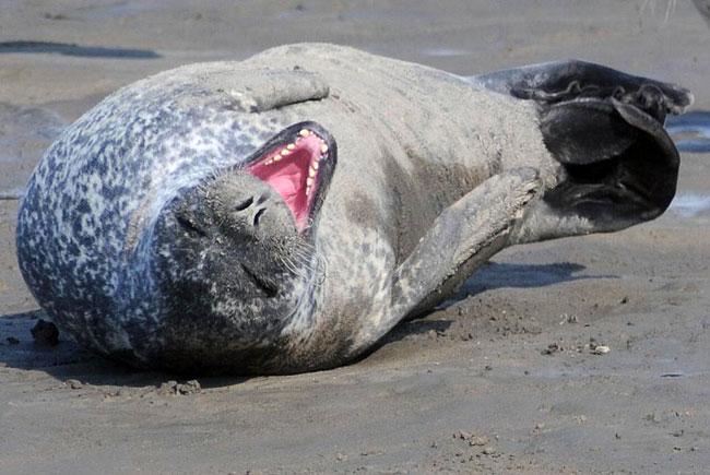 Da lacht sogar der Seehund! Foto (C): Eilert Voß