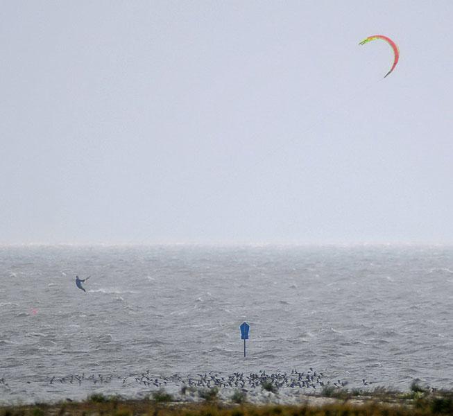 Schillbank Campen/LK Aurich/Ruhezone des Nationalparks: Vom Kitesurfer unbemerkt flieht ein unscheinbarer Trupp Alpenstrandläufer vor dem Kitesegel. Foto (C): Eilert Voß/Wattenrat