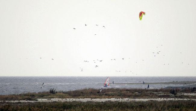 Kire- und Windsurfer in Uplewar/LK Aurich vertreiben Enten von der Schillbank (Ruhezone des Nationalparks), Foto (C): Eilert Voß/Wattenrat
