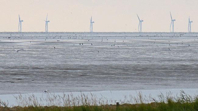 """Windpark Nordergründe, direkt am Nationalpark Niedersächsisches Wattenmeer und """"Weltnaturerbe"""", Vogelkollisionen unausweichlich, Foto (C): Ingrid Marquardt/Wattenrat Ostfriesland"""